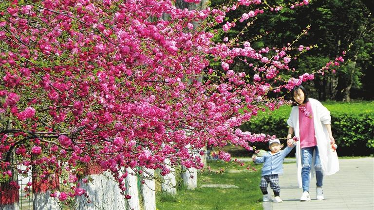 "<a href=""http://4g.tynews.com.cn/system/2021/04/09/030322415.shtml"" >我市公园里各种花卉相继开放</a>"